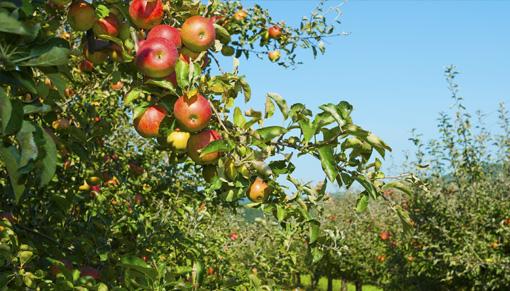 Software Industria Agroalimentaria